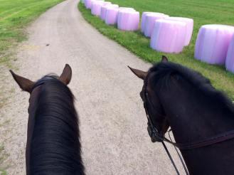 Me maastoillaan! T: Kalevi & Hemmo